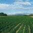 Azienda Agricola Valle dell'Oasi
